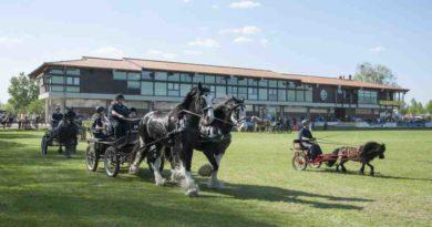 MAFZ Erlebnispark Paaren Pferde