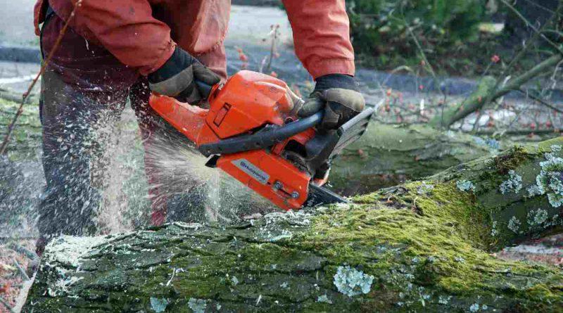 Aus für Park Leonore in Lankwitz: Fällgenehmigung für 110 Bäume