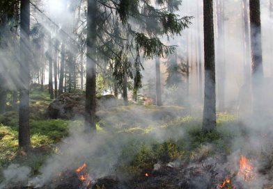 Brandenburg: Waldbrandsaison beginnt