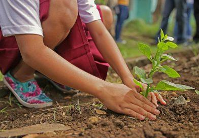 Integration durch gemeinsames Gärtnern