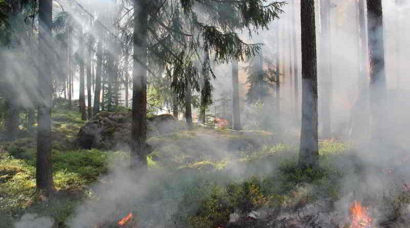 Waldbrandgefahr in Berlin und Brandenburg steigt