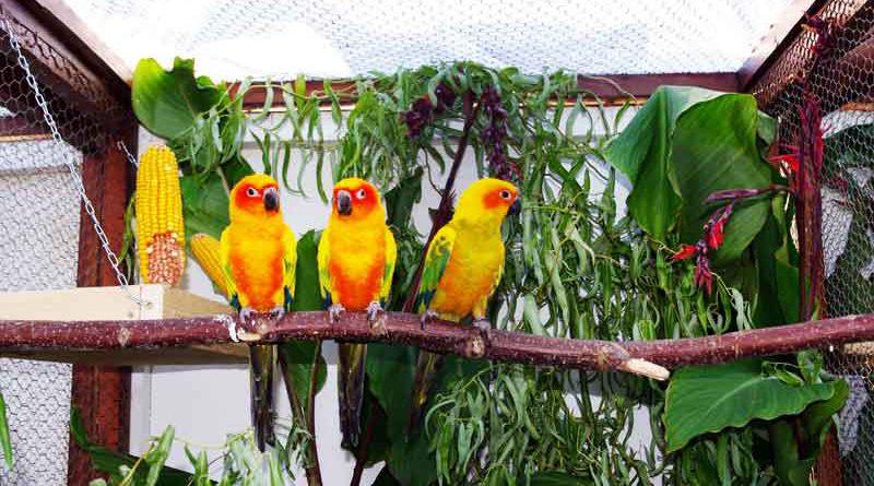 Dschungel-Feeling in Teltow. Bunte Pfirsichköpfchen, Papageien und Aras können Vogel-Liebhaber am 09. und 10. September bei einer Ausstellung bewundern.