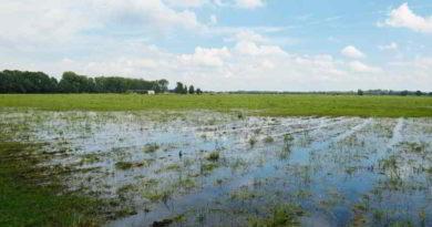 Der Regen sorgt für große Ernteverluste in der Region. Am schlimmsten betroffen ist Getreide. Und die Sommer der Zukunft werden nicht besser...