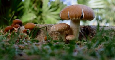 Mushrooms (Image by Couleur [CC0 Public Domain], via Pixabay)