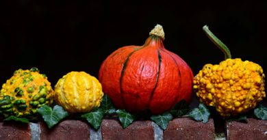 Pumpkin_(Image by ulleo [CC0 Public Domain], via Pixabay)