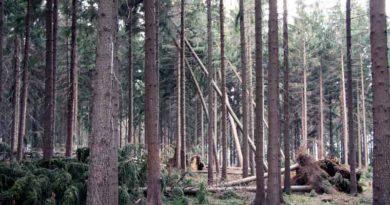 """Nach dem Sturm """"Xavier"""" warnen die Brandenburger und Berliner Forsten vor Spaziergängen in Wäldern, Parks und Grünanlagen."""