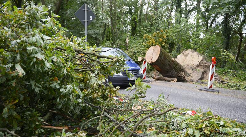 Sturmschäden in Kleinmachnow Copyright kai Vogel