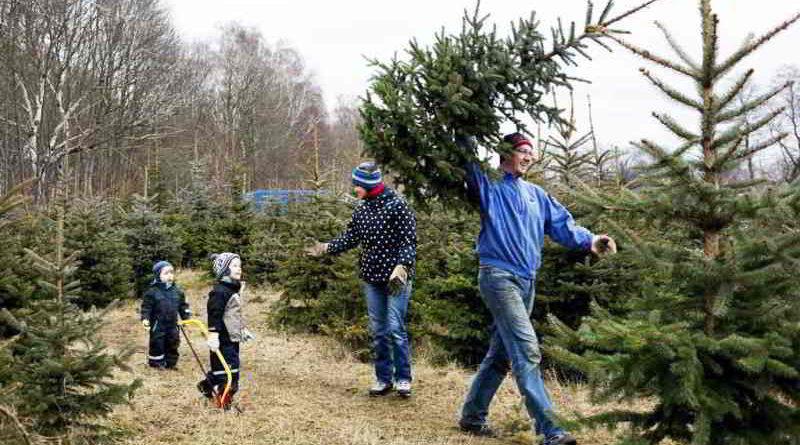 Weihnachtsbaum schlagen zwenkau