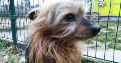 Ausgesetzter Hund Bad Belzig
