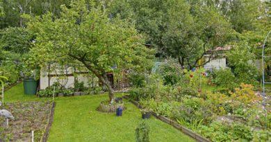 Kleingärten Teltow