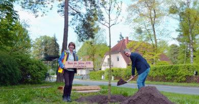 Kleinmachnows Bürgermeister Michael Grubert hat an der Hohen Kiefer eine Esskastanie gepflanzt