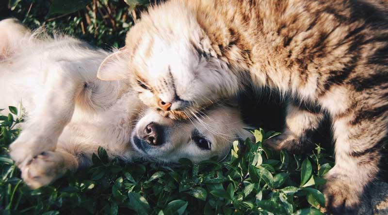 Hund und Katze (c) pixabay