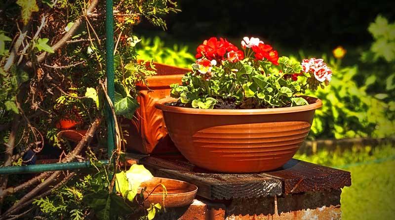 Garten (c) pixabay