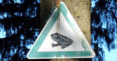 Krötenwanderung Schild
