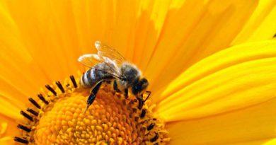 """Am 7. und 8. Juli zwischen 10:00 und 15:00 Uhr empfangen zahlreiche Bienenzüchter beim """"Tag der deutschen Imkerei"""" interessierte Besucher an ihren Bienenständen. Auch der Imkerverein Region Teltow beteiligt sich wieder an der bundesweiten Aktion."""