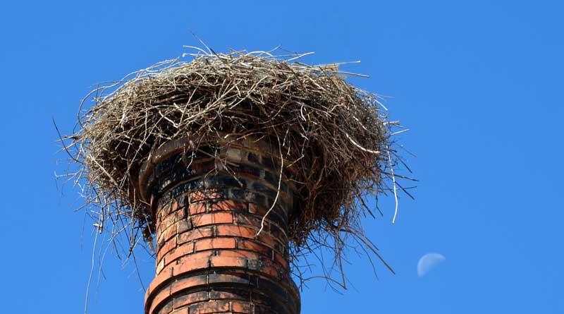 Am 17. Juni wird in Großbeeren trotz des fehlenden Hauptdarstellers das alljährliche Storchenfest gefeiert. Von 14 bis 18Uhr wird es auf dem Gutshof bei freiem Eintritt Bastel-, Mitmach- und Informationsstände geben.