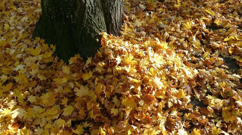 Der Herbst ist und mit ihm die Laubhaufen an den Straßenrändern. Doch zu viel davon sorgen für rutschige Gehwege und verstopfen die Gullis. Darum wird das Laub regelmäßig abgeholt. Die Termine der APM in Teltow, Kleinmachnow und Stahnsdorf.