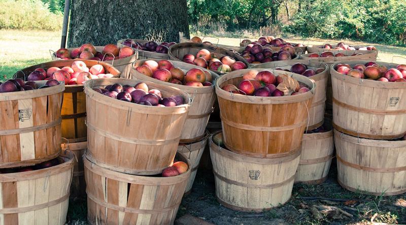 uf dem Berliner Messegelände unter dem Funkturm findet vom 6. bis zum 8. Februar die Fruit Logistica statt. Auf der Fachmesse werden mehr als 78.000 Unternehmer aus der ganzen Welt erwartet.