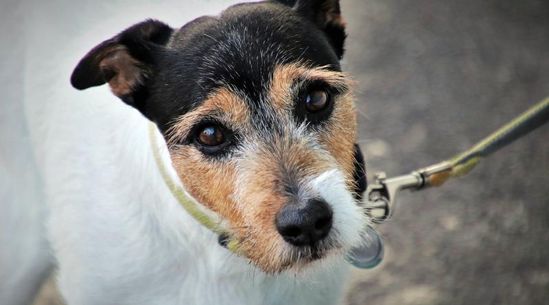 TKS hält Hunde an der kurzen Leine