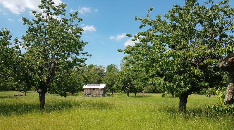 Bienen, Schafe und Apfelsaft: Impressionen vom Streuobstwiesenfest