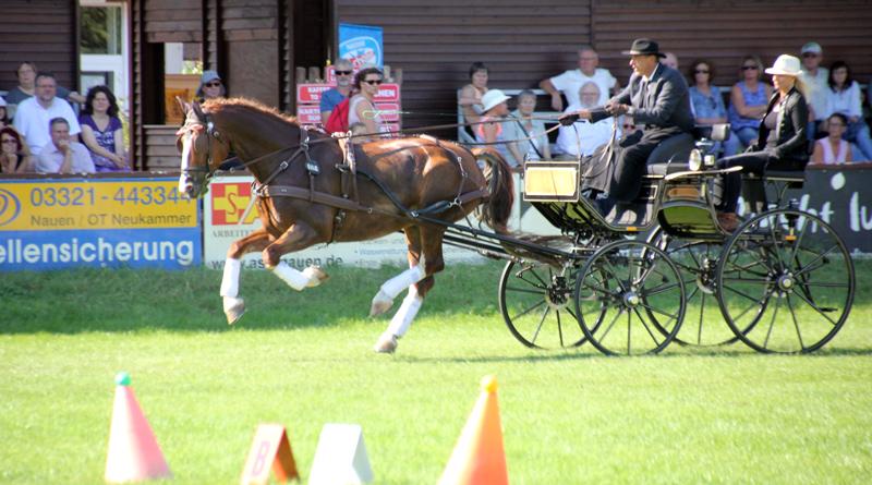 Die Besucher des diesjährigen Pferdesommers in Paaren im Glien erwartet am 24. und 25. August jeweils ab 09:00 Uhr ein volles Program.