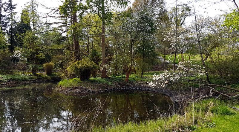 Die Freilandanlagen im Botanischen Garten Berlin dürfen wieder Besuch empfangen. Am kommenden Montag wird der genaue Termin bekannt gegeben. Derzeit können Interessierte den Frühling mit dem virtuellen Fotorundgang eerleben.