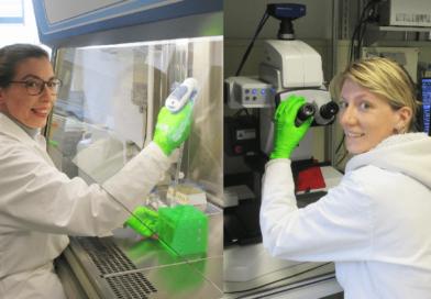 Potsdamer Biomaterialien für Zahnmediziner der Charité