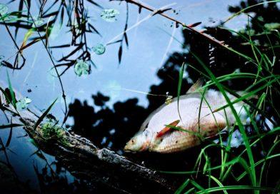 Teltowkanal: Gestank und Fischsterben